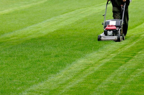 Commercial landscaping maintenance, particularly lawn maintenance.